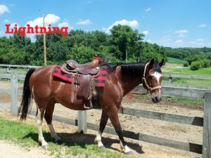 Lightning- Line Horse, Gelding, Quarter Horse  Everyone thinks I'm fast because of my name. In fact, I'm pretty slow. However, I am quick to make new friends and am great with newer or experienced riders.