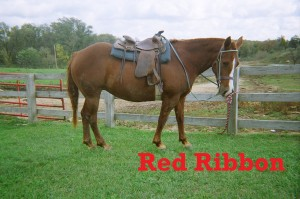 Red Ribbon- Line Horse, Mare, Quarter Horse  I am a favorite pick here at White Pines Ranch. I am so confident in my ability to do my job that I am always the lead line horse when we go out on the trail.