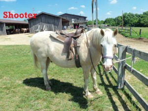 """Shooter- Line Horse, Gelding, Quarter Horse  I am well known as """"Shooter the Tooter"""" so it's more fun to ride me than ride behind me! I am the most well behaved horse in the herd, and I love everyone!"""