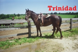 Trinidad- Line Horse, Mare, Draft Horse  I am a gentle giant, and I enjoy hanging out with my sister Red Ribbon.  I am calm enough to have beginners, but I'll gladly handle and experienced rider as well.