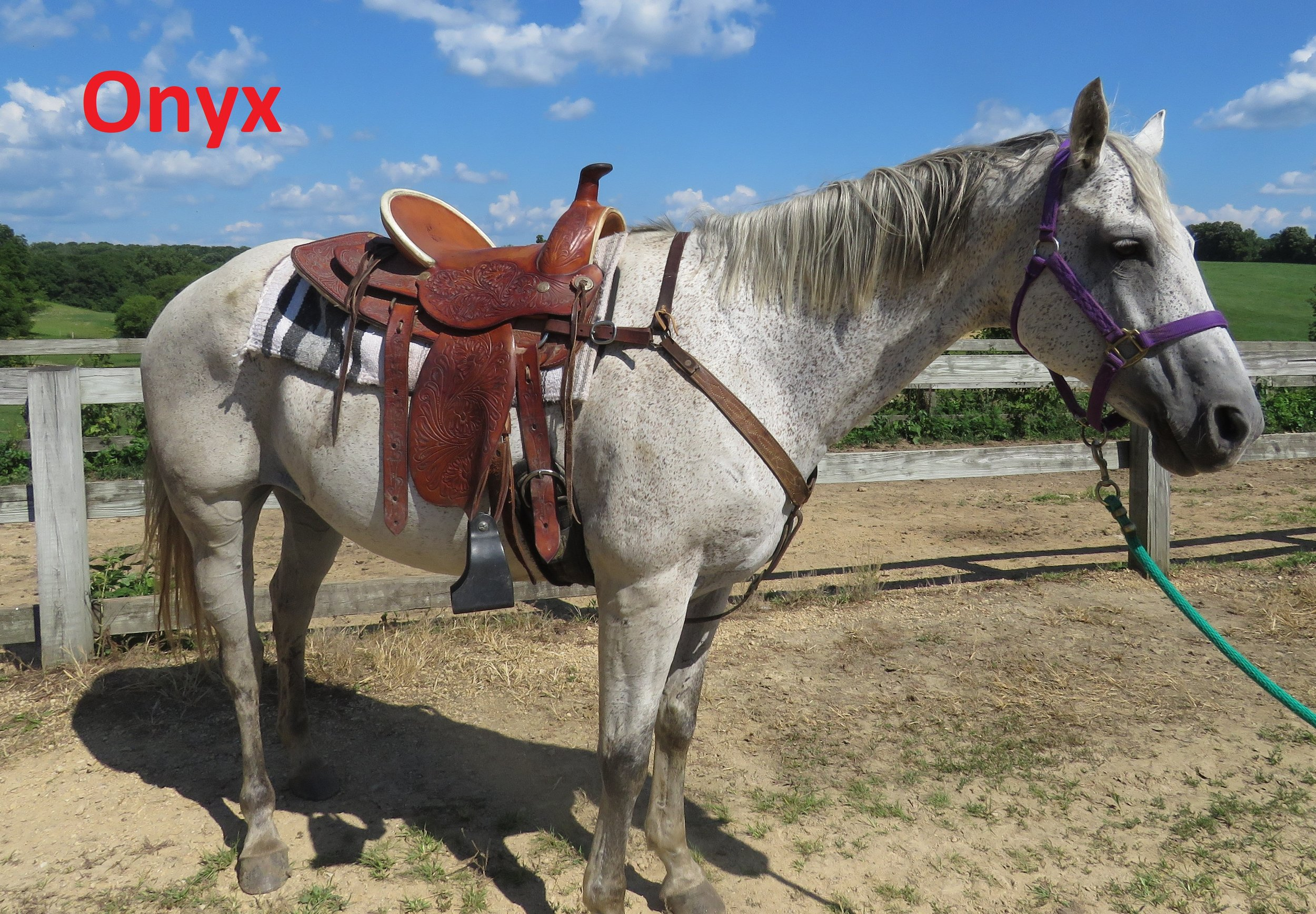 """Onyx- Line Horse, Mare  I am the newest horse here at the ranch, but I was only a staff horse for a short time because I am so well behaved. I have a big heart and am very """"motherly"""" with the other horses."""