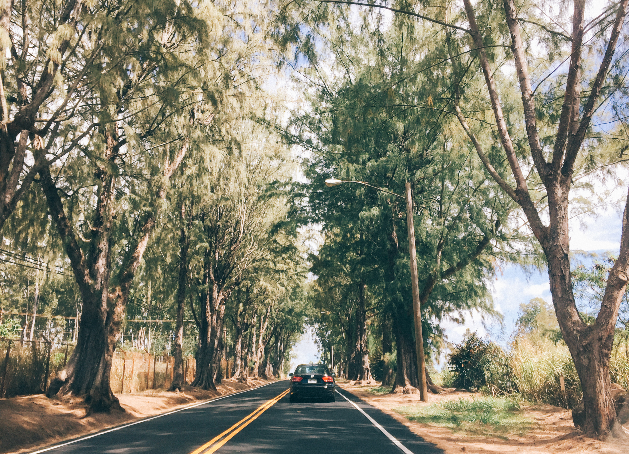 The drive north to Kuaokala on Farrington Highway is lined with trees, ranches, and pineapple farms.