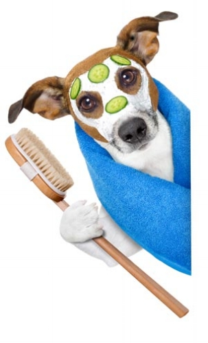 "Our ""BATH & BRUSH CLUB"" offers Unlimited Dog Bath and Brush Service!"