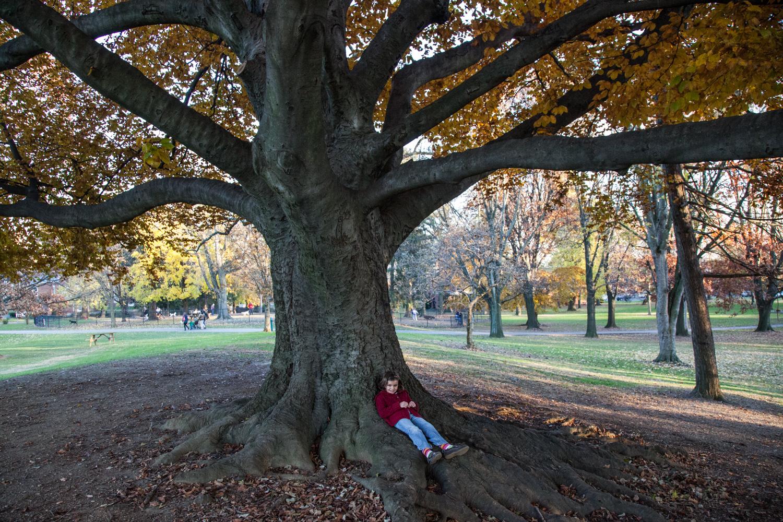 PA Lancaster Buchannan Park—2012 November 21;16;03;00.jpg