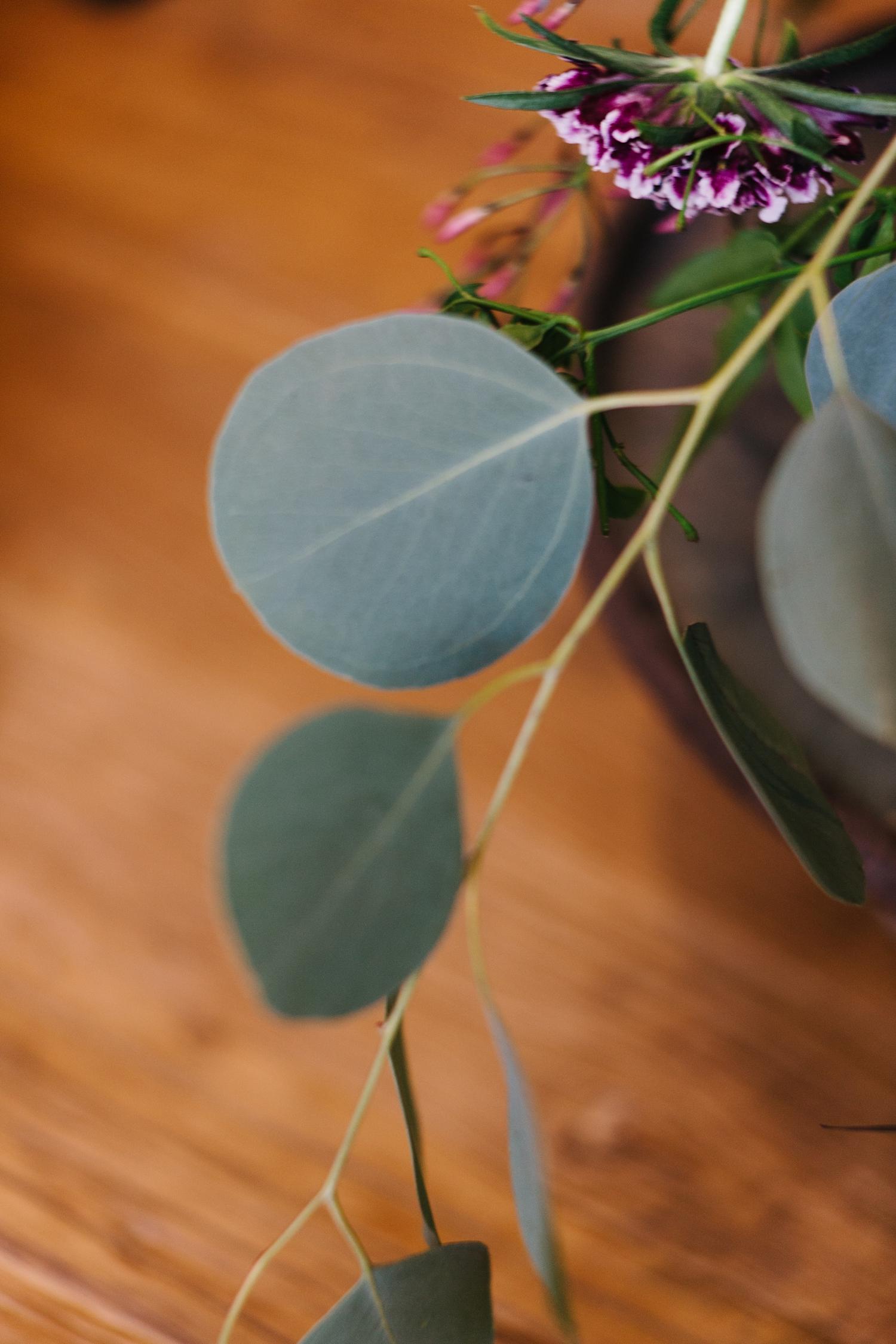 Silver Dollar Eucaplyptus