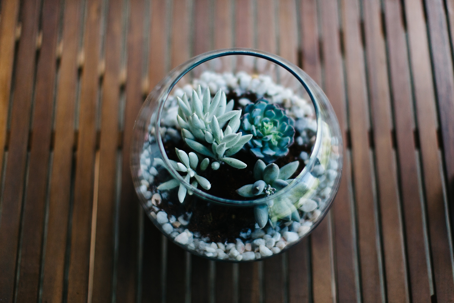 Put as many succulents as you would like in the terrarium. Sprinkle soil around them to cover their roots.