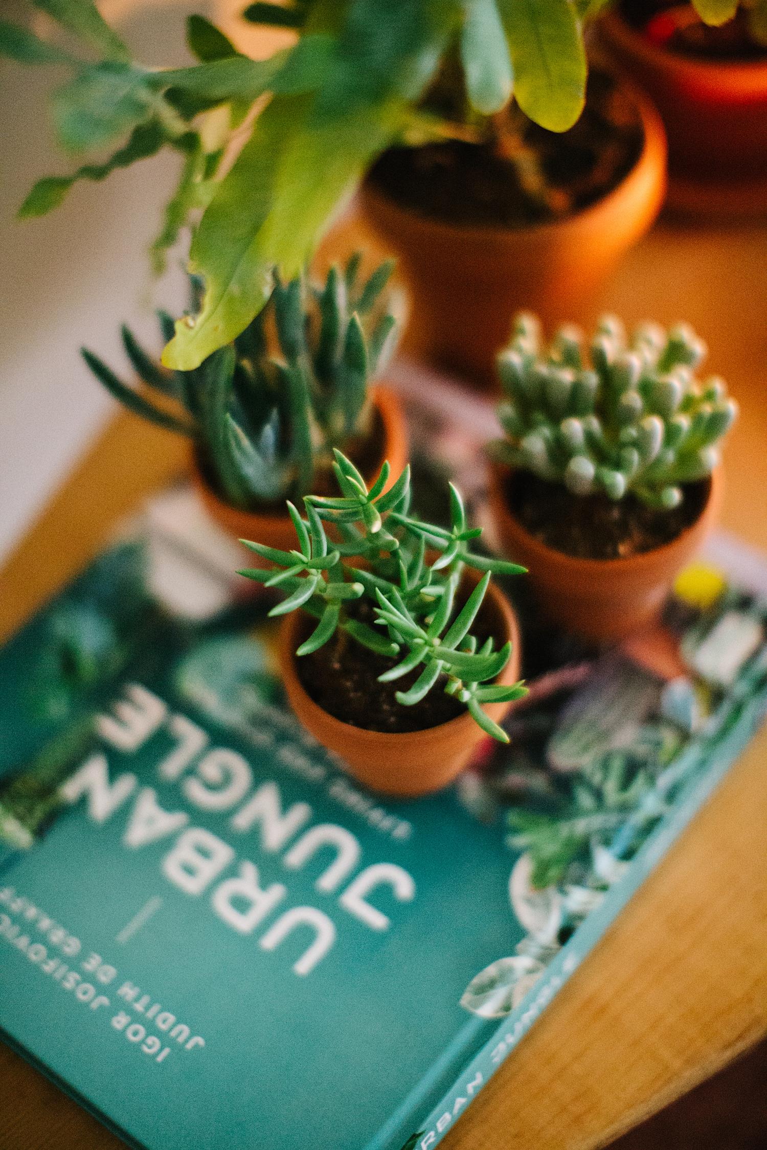 Book and plant stack the perfect urban jungle design.