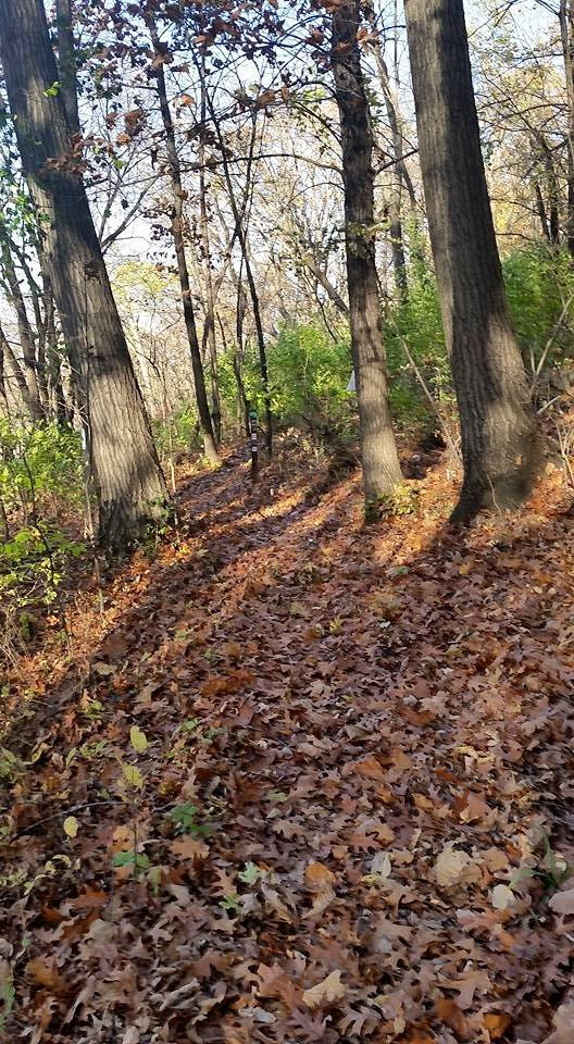 WYCO - Trail - Rozarks Hiking Trail in the Fall.jpg