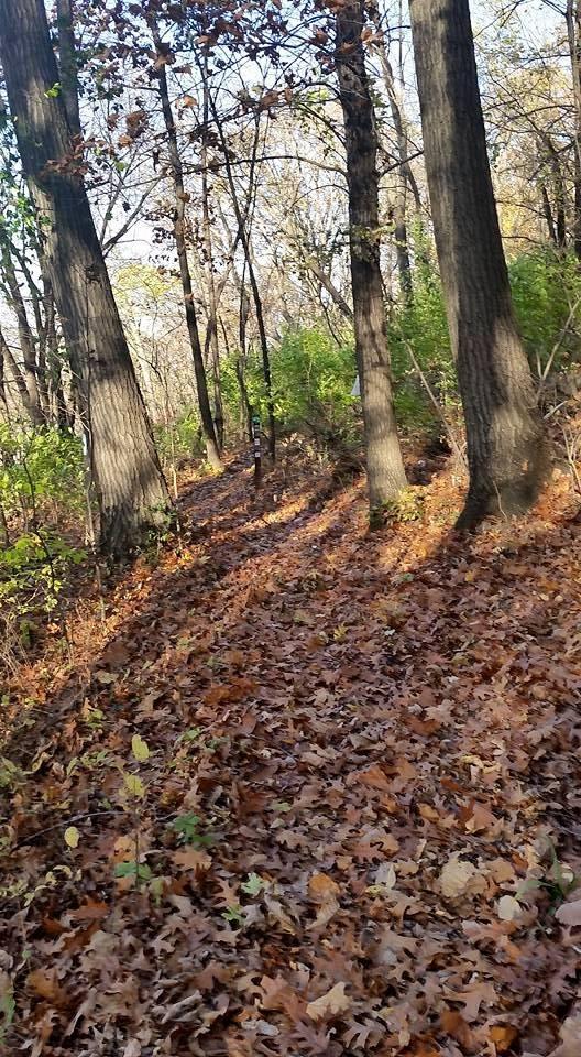 WYCO - Trail - Rozarks Hiking Trail in the Fall.jpg