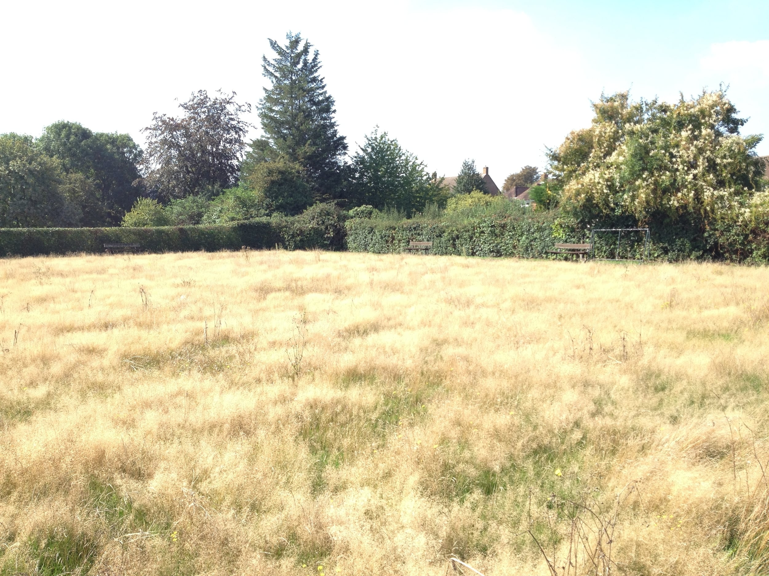 Summer 2014, long grass in the former bowls green