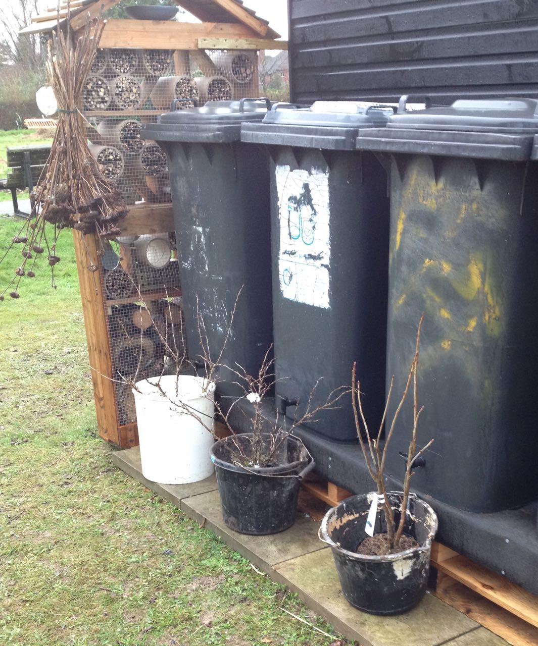 Wheelie bin water butts in progress but action