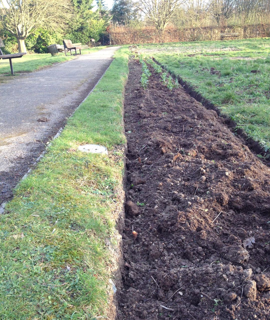 A new crisp edge to our 'veg ditch' - we can sow more broad beans there soon - to join the ones that went in in the Autumn, which are growing well.
