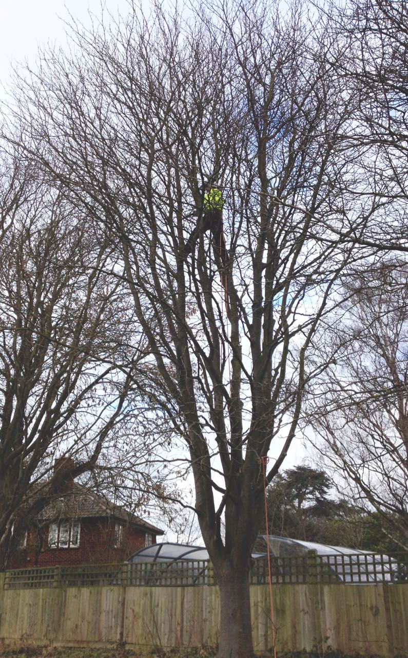 Hi Viz man in tree - those of us who are afraid of heights found it quite uncomfortable to watch...