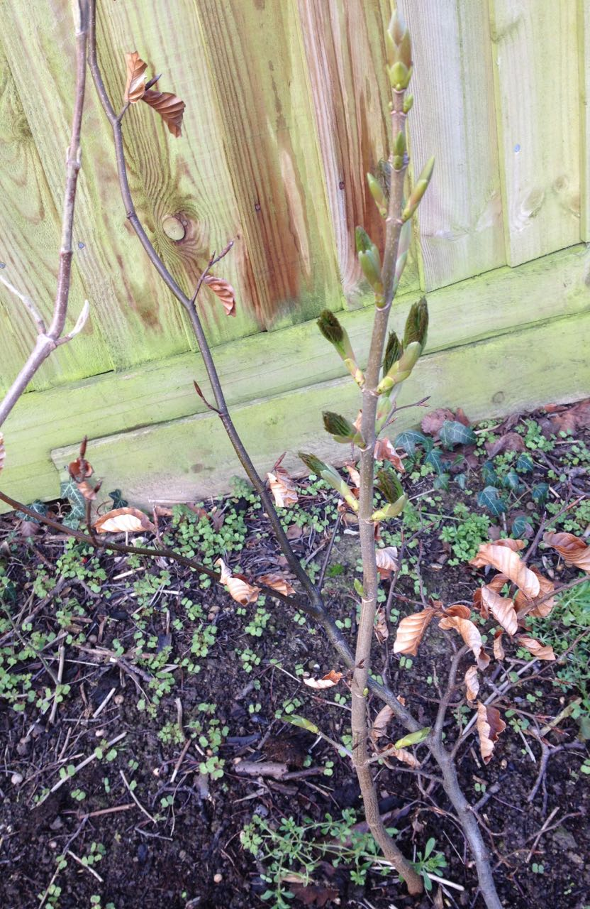 Three types of plants in our native hedge and some weeds below... oops.