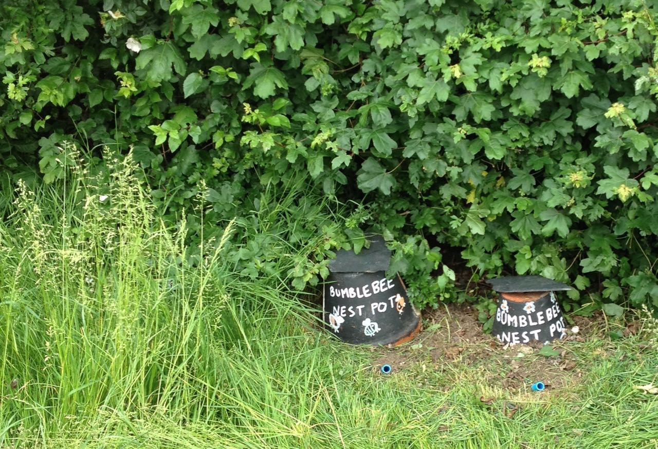 There has been so much growth of grass and hedge that we lost sight of our bumblebee nest pots - two uncovered so far
