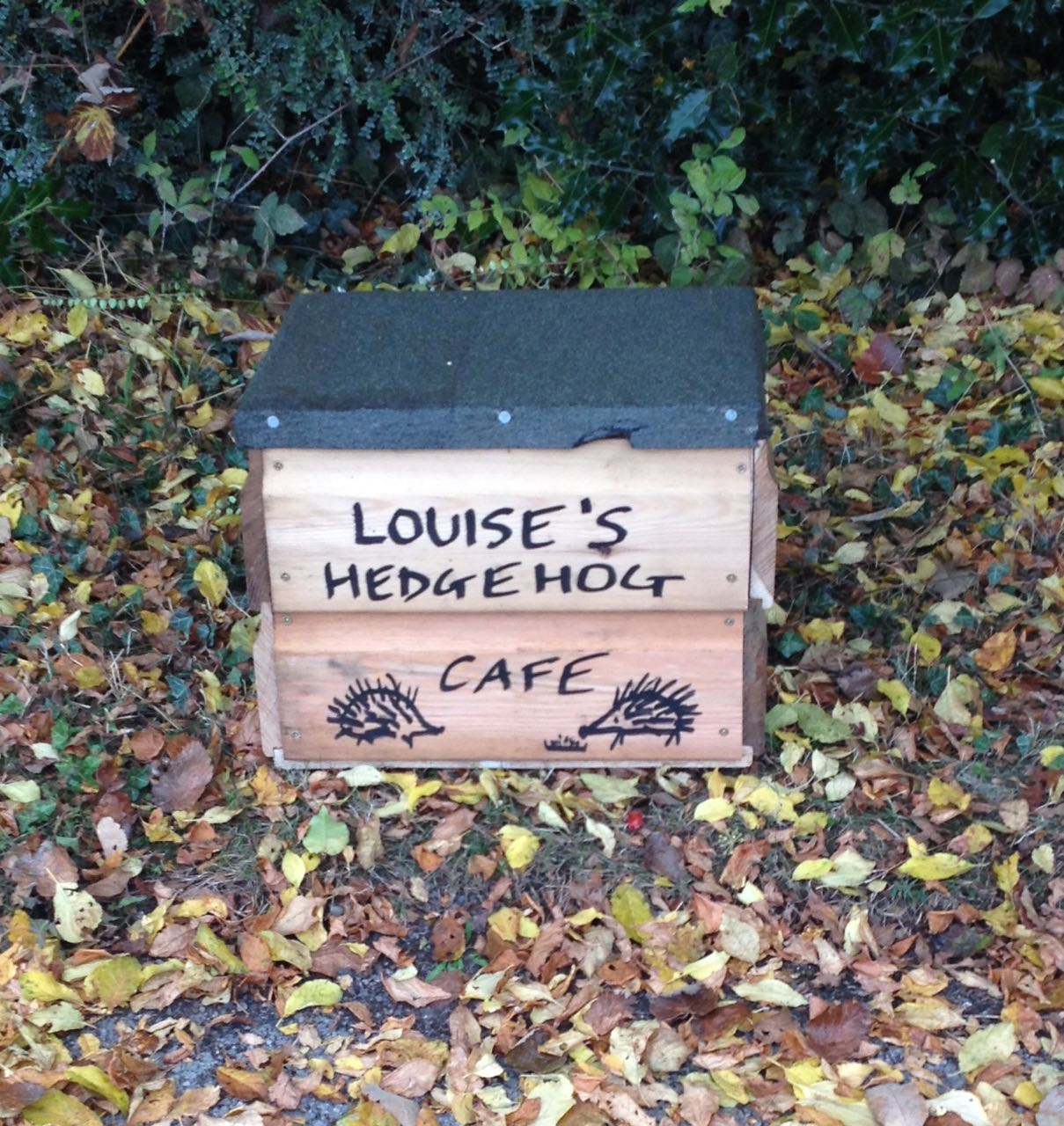 Our hedgehog cafe, which is the same design as a hedgehog house but has a hinged lid so we can put food and water inside without dogs and cats eating it. Louise is our top hedgehog fan...