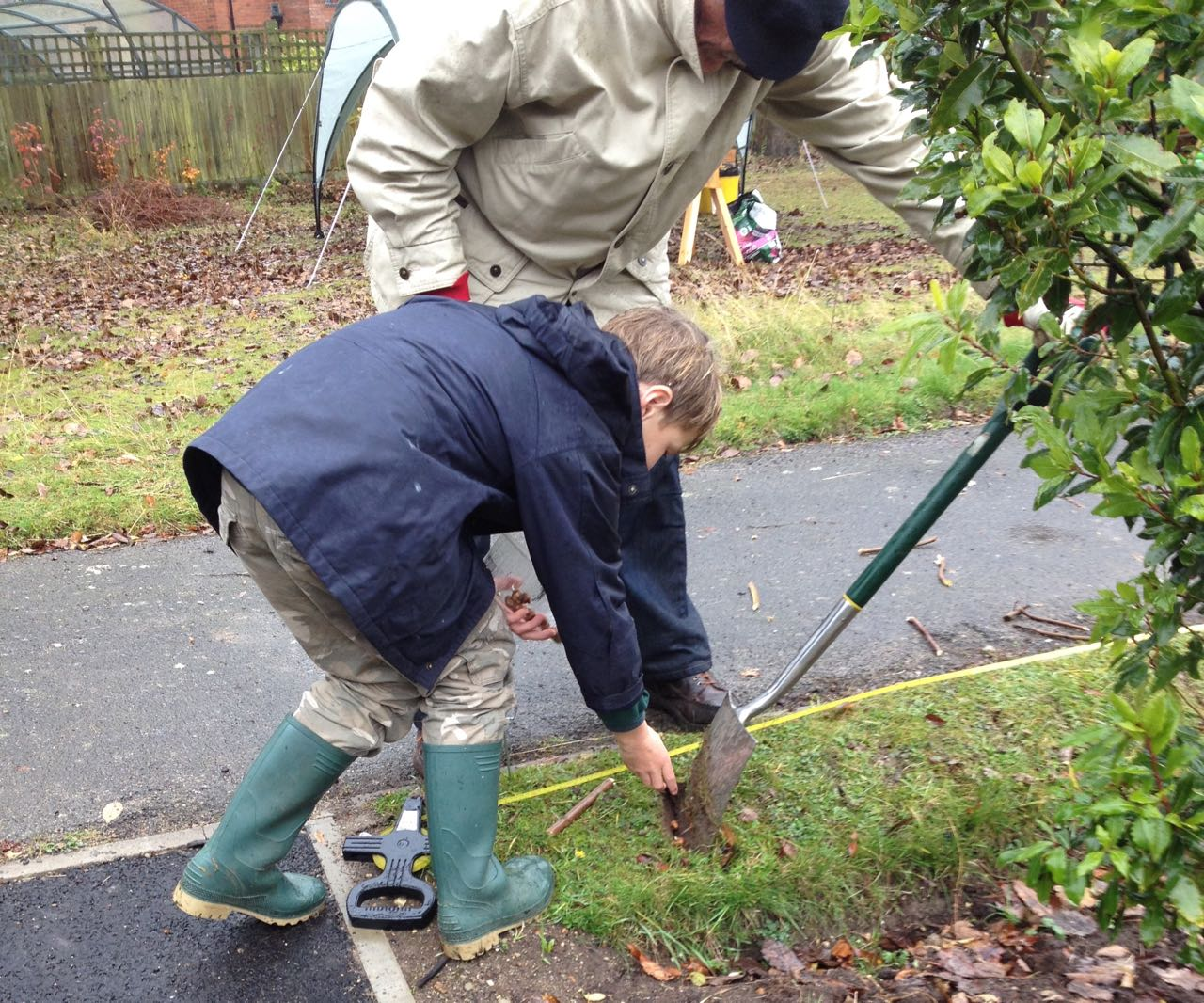 One of the cubs working with Nigel from Rotary. We planted the small corms into slits in the close-mown turf. The turf was too thick and spongy to raise a flap of earth at the right depth (it has a lot of chalk grassland plants in it like yarrow). We hope they will survive the squirrels, flower in Feb/March 2017 and proliferate to give some welcome early nectar every Spring for pollinators.