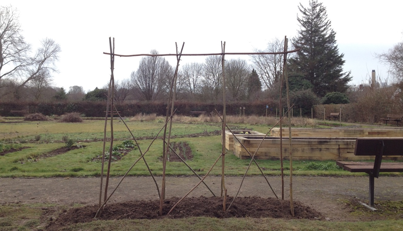 We made a new bed for sweet peas and started a support from willow from a nature reserve nearby - thanks Vic!