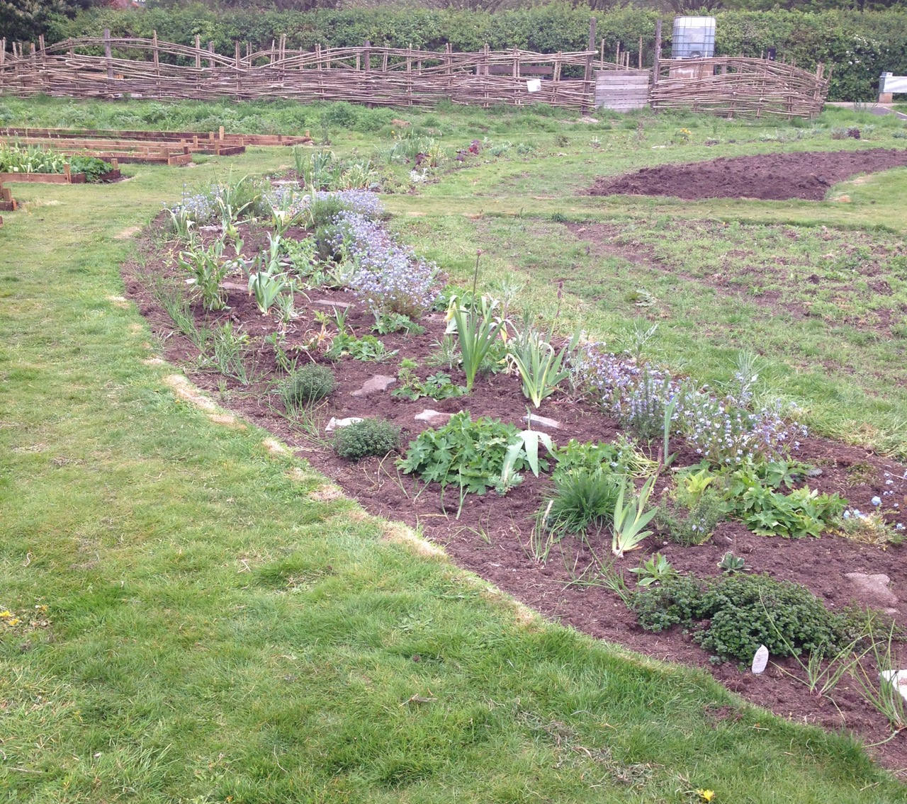 The new perennial beds are doing well but we have a lot of re-growth of annuals seedings, which take a lot of work to clean.