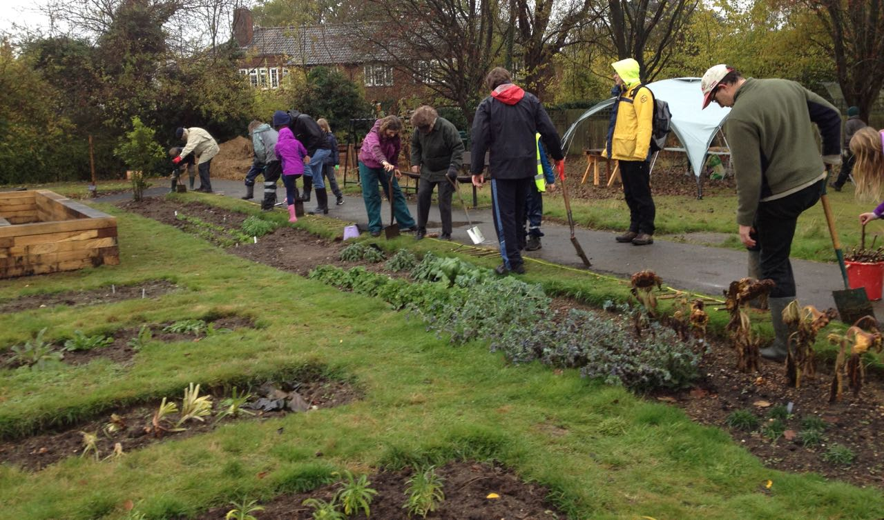 November 2016: 28th Cambridge cubs, with garden volunteers, planting 4,000 Purple for Polio crocus bulbs around the former bowling green. This was funded by four Cambridge Rotary clubs. We had a surprising amount of fun, considering the very cold wet weather. On the evening of 13 June 2017, the Tuesday cubs returned -in perfect weather - and we did some gardening but also had a fun time with giant bubbles and marshmallows.
