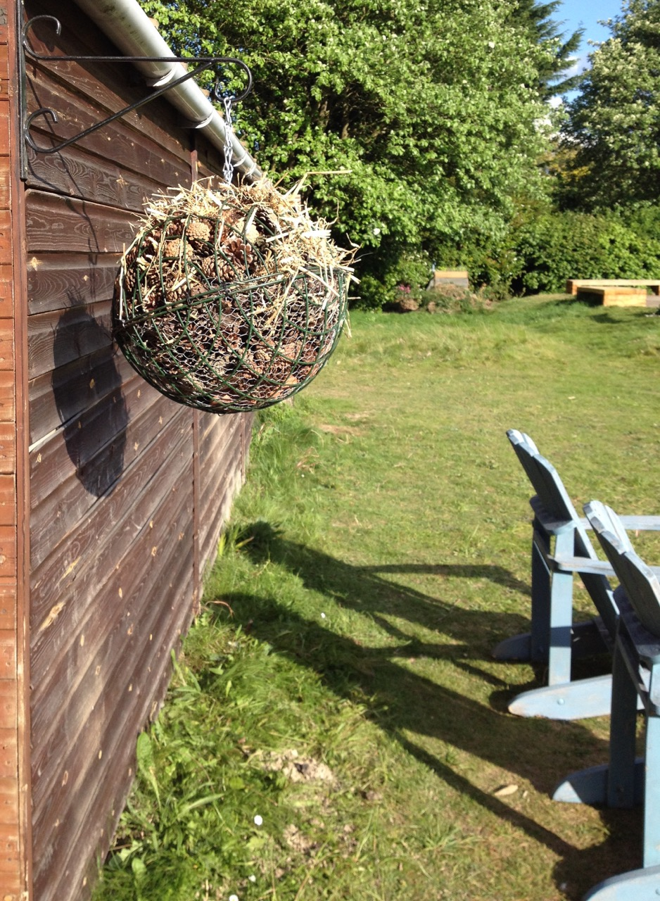 We hope the hanging basket construction will be good for ladybirds, lacewings and spiders to hang out - and we like the way it looks.