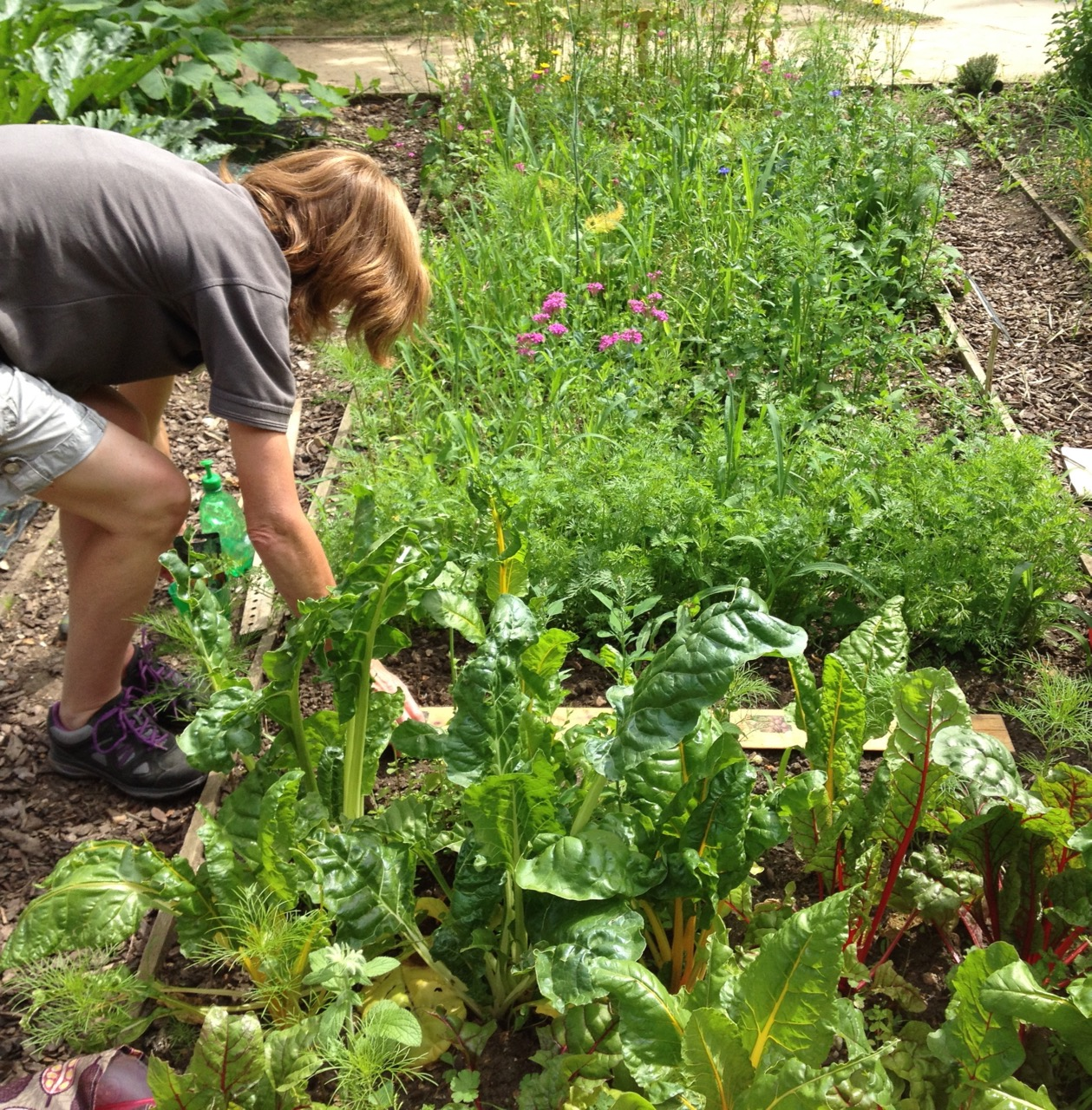 Alison from the RHS sowing seed along a home-made measuring stick