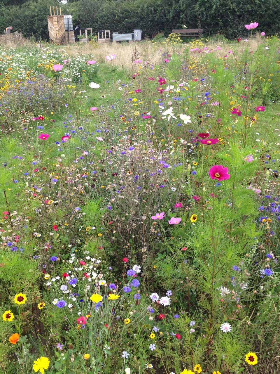 Some of the Patriotic annual Pictorial Meadow bed - with the new bug hotel (disguise for the water tower) in the background - still in progress.