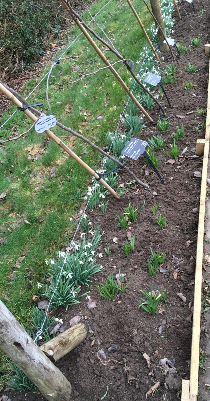 Lots of weeding between bulbs going on at the moment - thanks Louise!