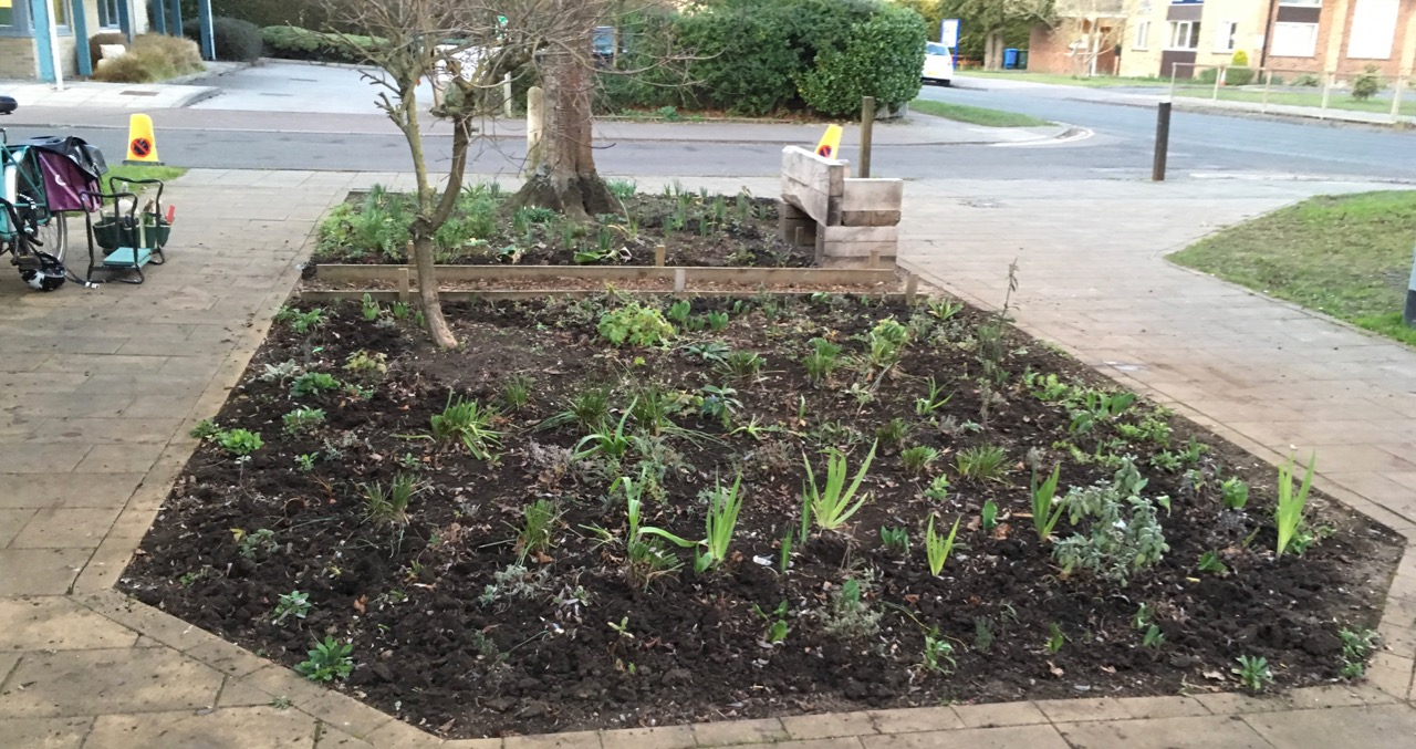 In early Spring 2019, Bob and I had a quick leaf-clear and weed of most of the two 'tree beds' and planted a few more plants. It would be great to plant some tete-a-tete mini daffodils for next year. The snowdrops are over and there is a gap between bulbs.