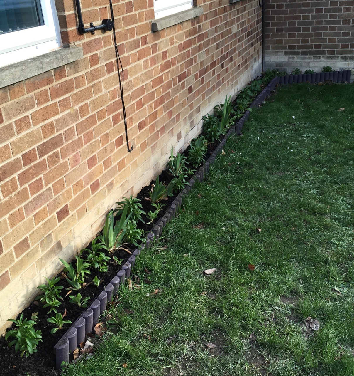February 2019: we have planted a new mini bed by the school reception with some edging donated by a local resident.