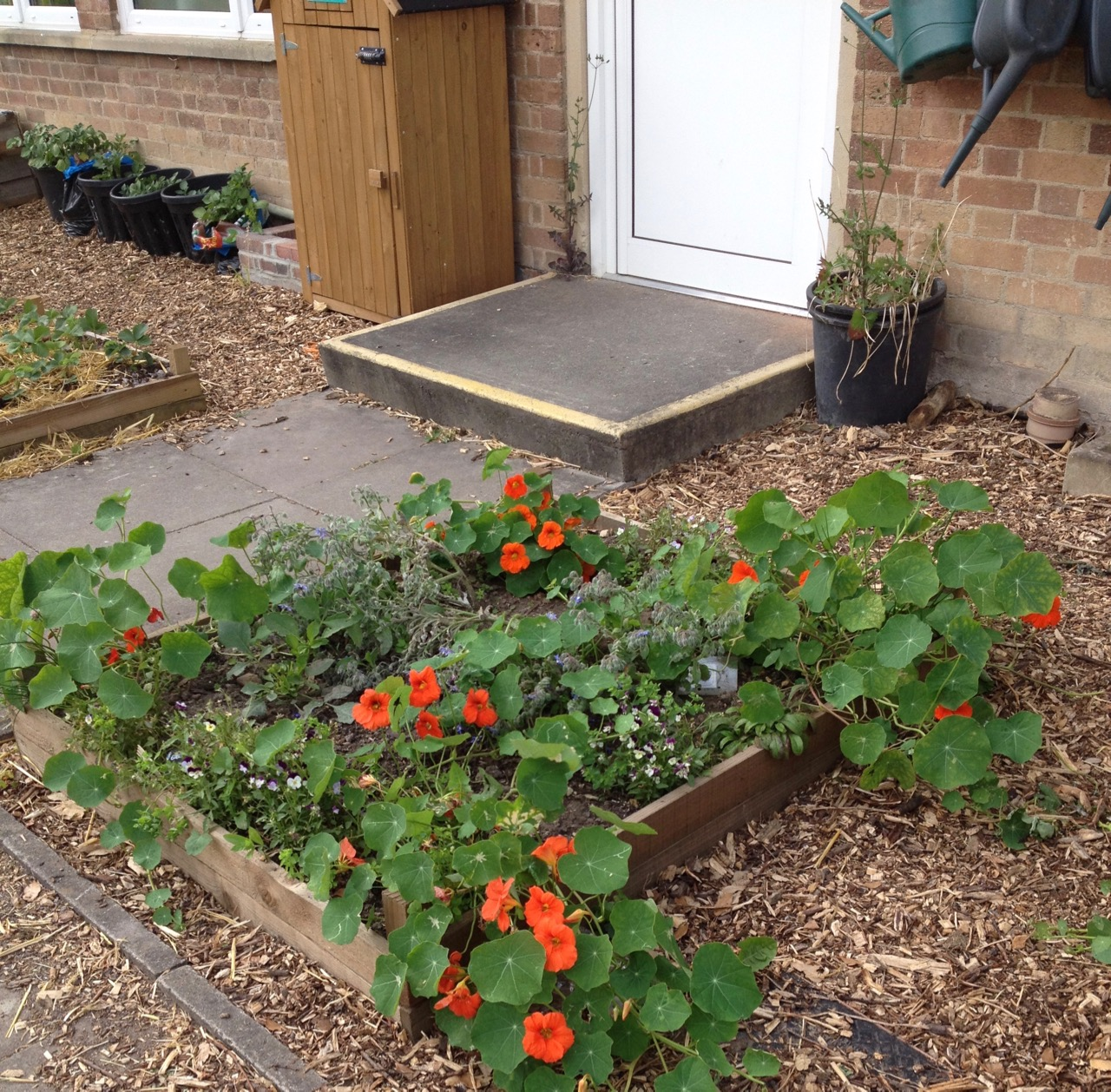 June 2018: The edible flower bed. The red nasturtiums are very peppery and popular with children. Also, potatoes growing in pots and our birdhouse second-hand mini shed.