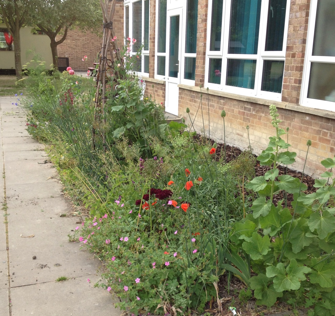 June 2018: the two 'pretty flower' beds by the staff room. Good for pollinators - and staff.