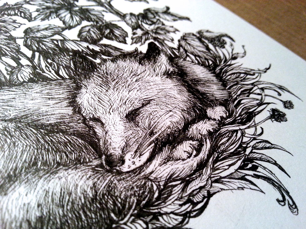 fox_web1.jpg