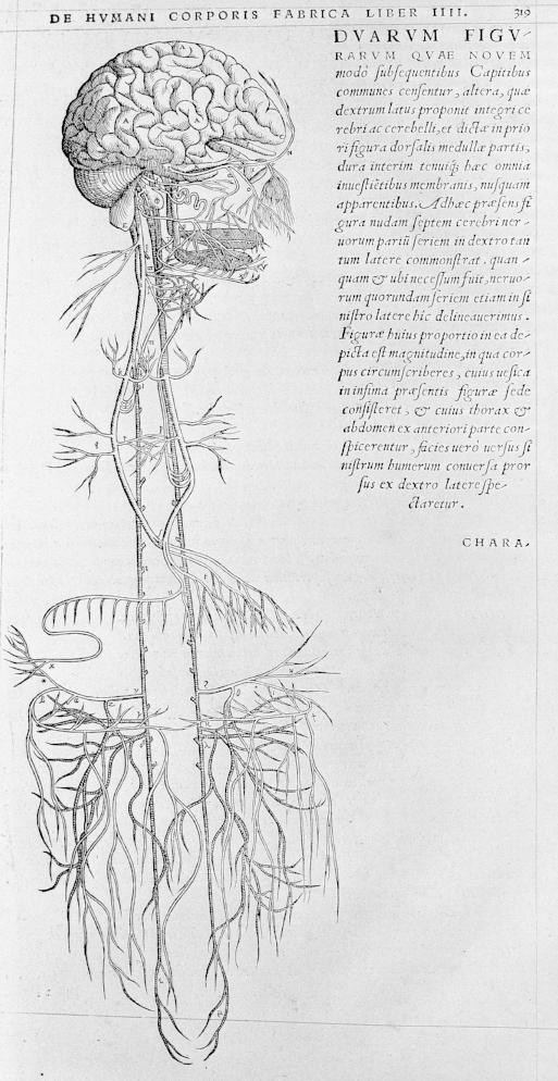 Andreas Vesalius - 1543