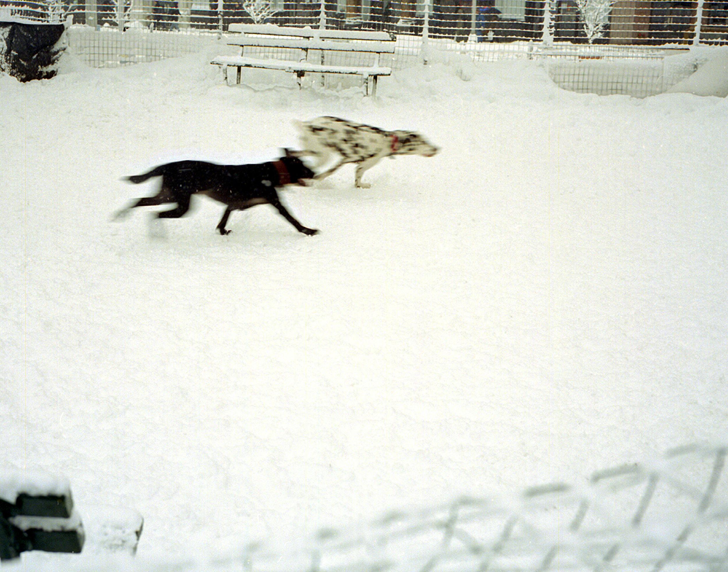 """Running Dogs"""