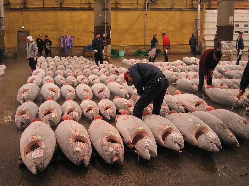 Tuna market in Japan (pictured). Tuna species will not survive unless consumption levels change significantly.  Youth can lead this change.