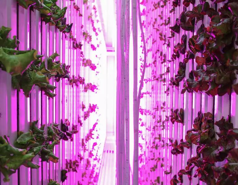 Is Boston the Next Urban Farming Paradise?     The Guardian