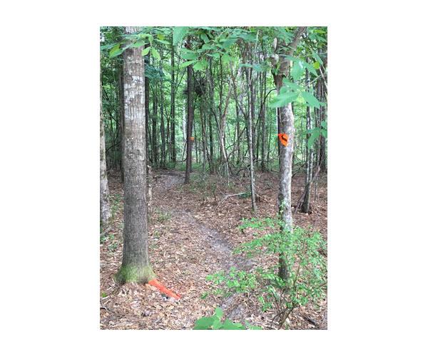 nothing like fresh trail