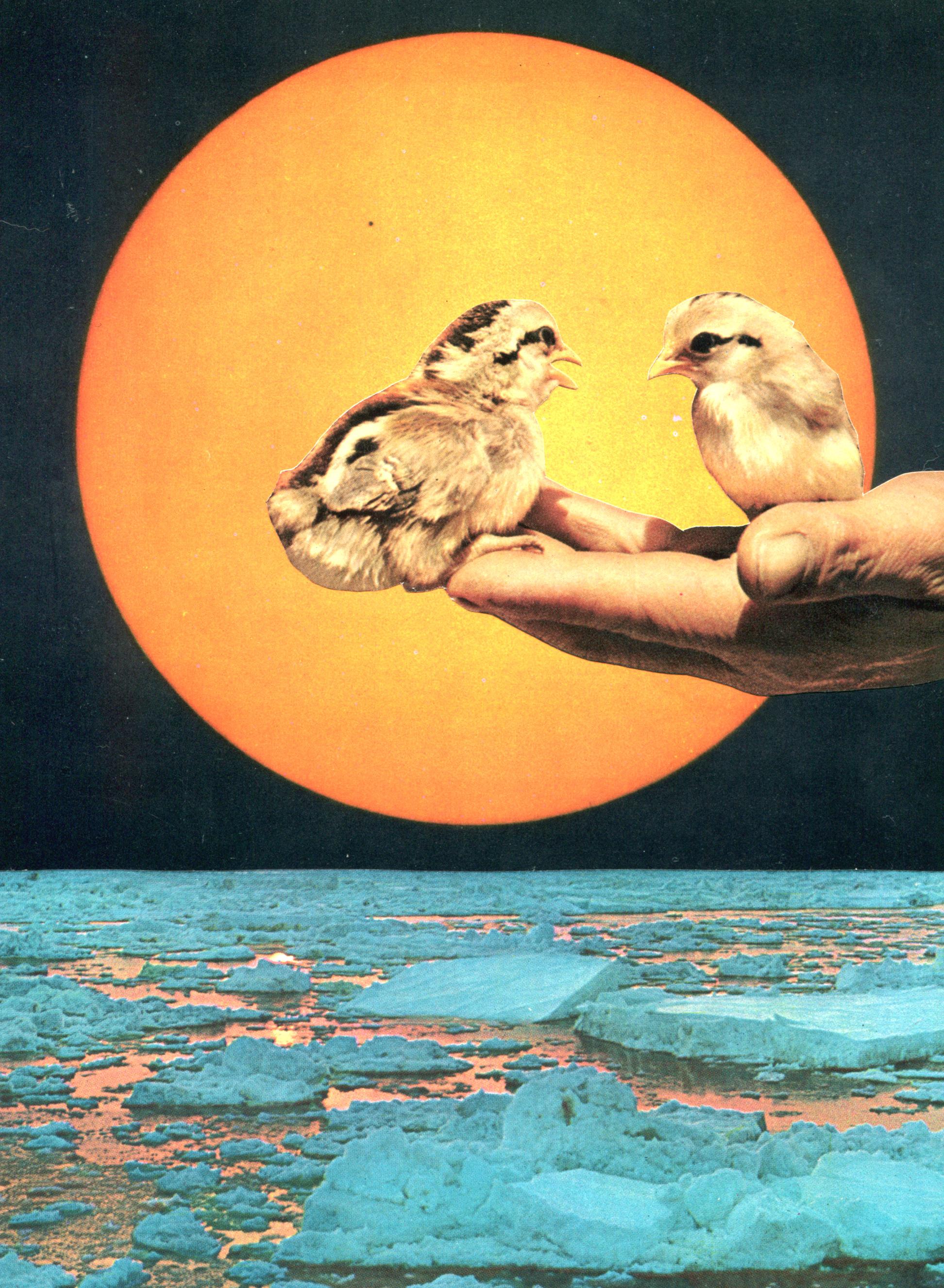 Birds-and-Sun-web.jpg