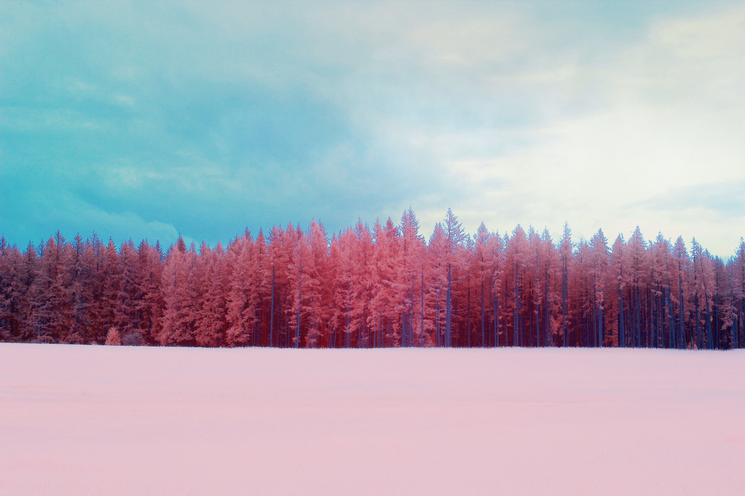 IR_Oregon_Forest_02.jpg
