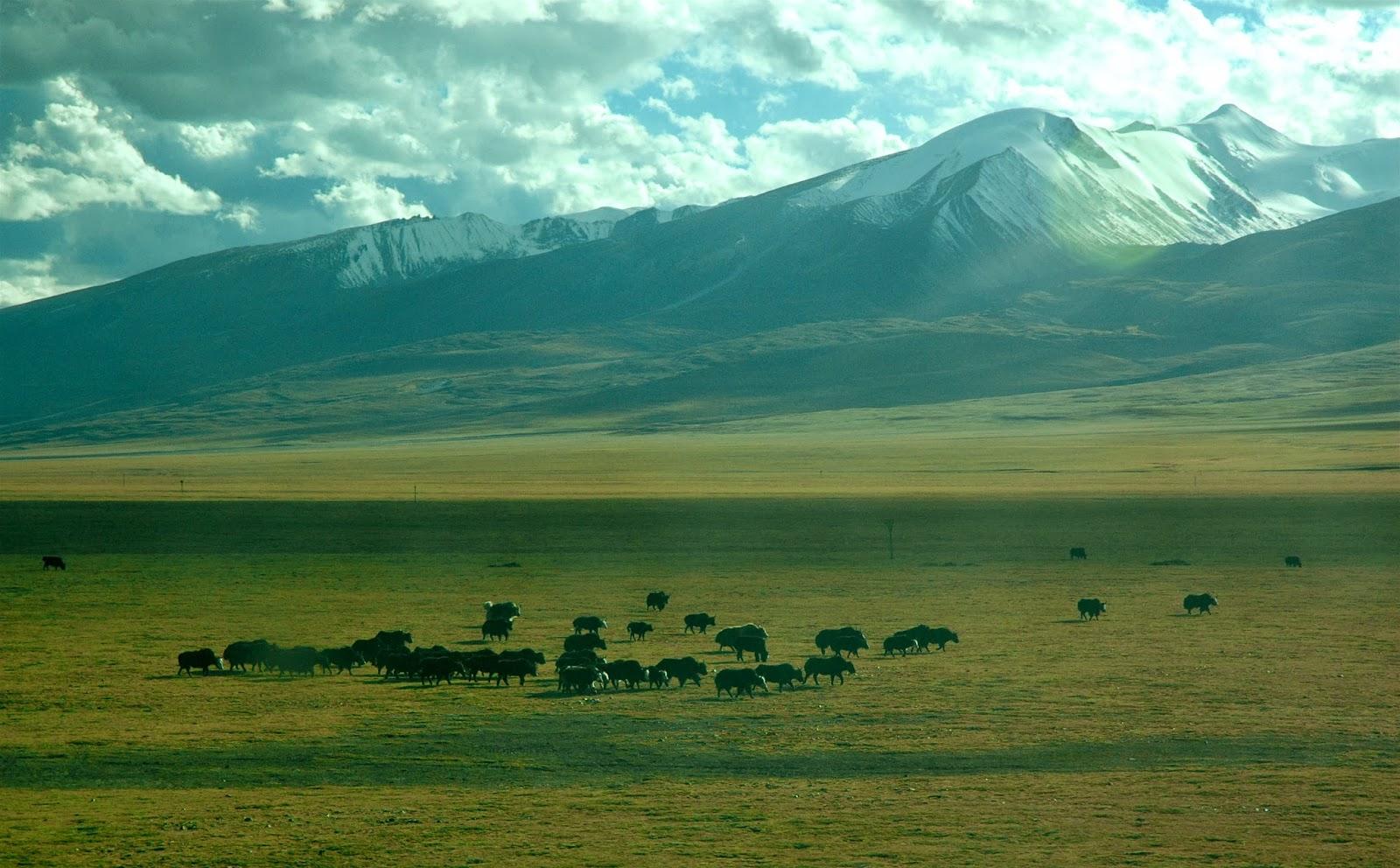 Unknown, Tibet 2007
