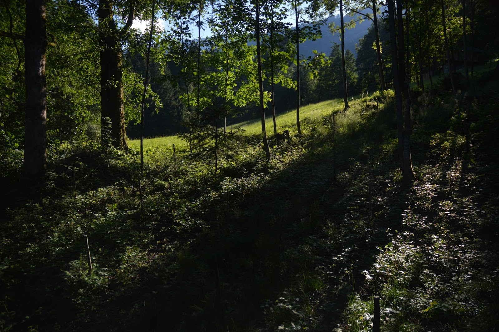 Fügen, Austria 2016