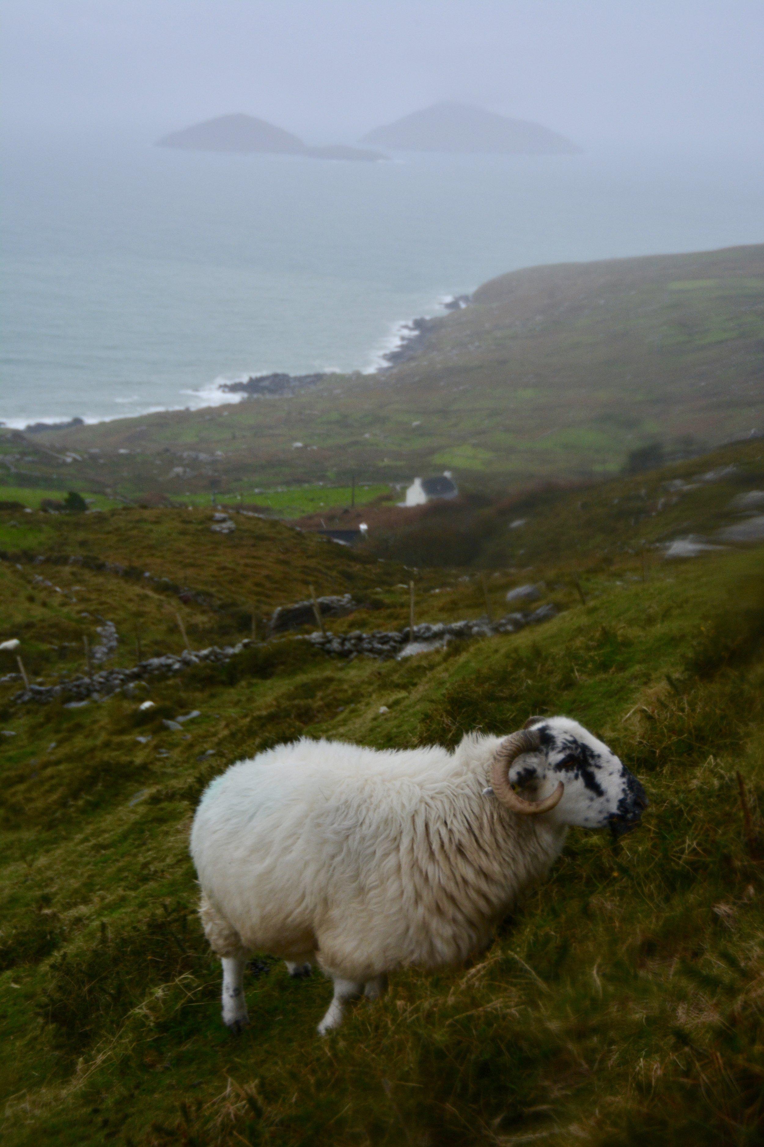 Wild Atlantic Way, Ireland 2017