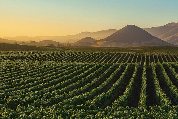 https://www.touringandtasting.com/Assets/Client/images/wineries/edna-valley-vineyard-sp13-1.jpg