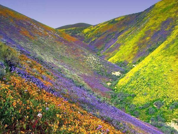 SLO Wildflowers.jpg
