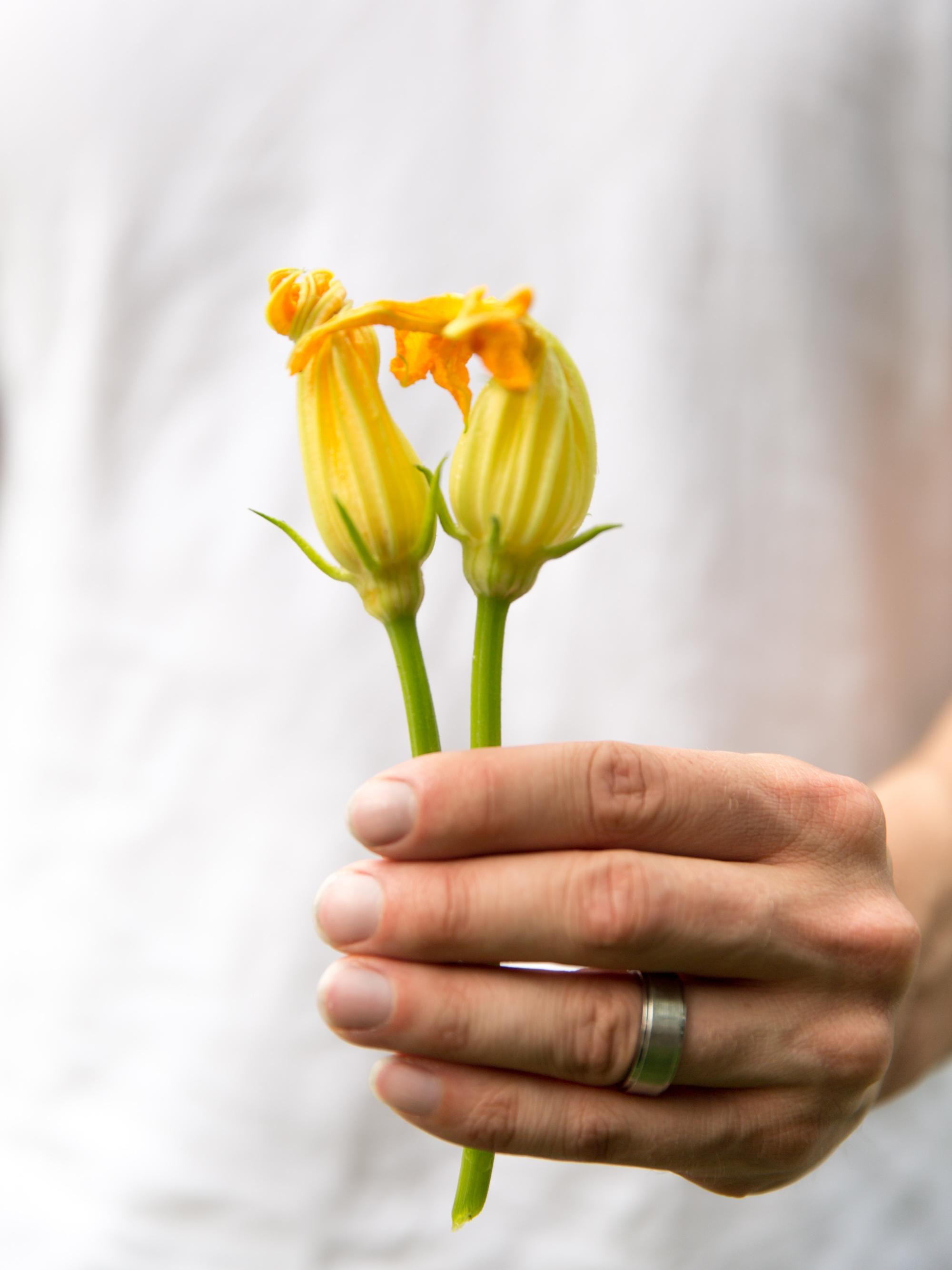 Squash Blossom From Garden
