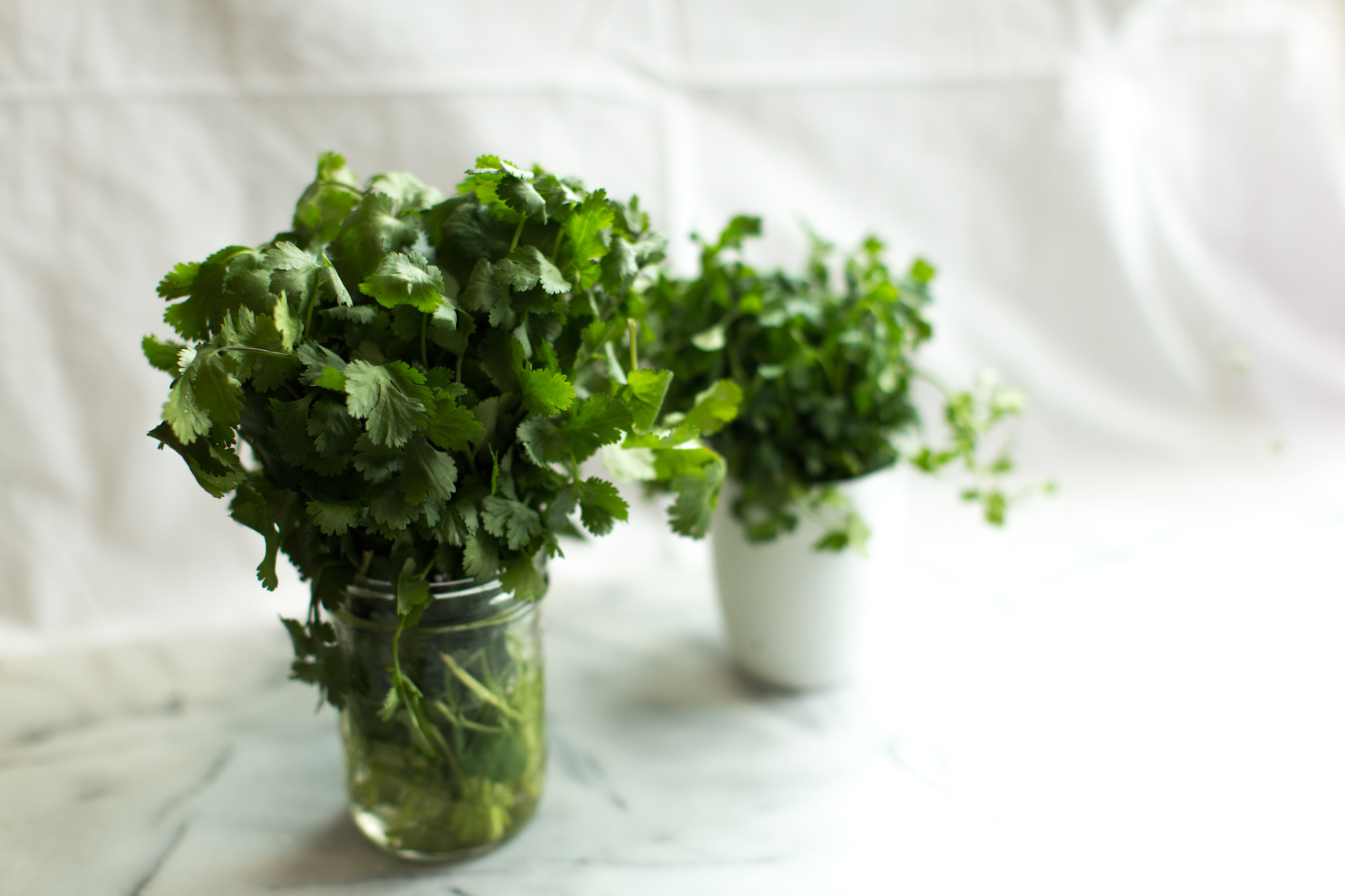 tips for keeping herbs fresh