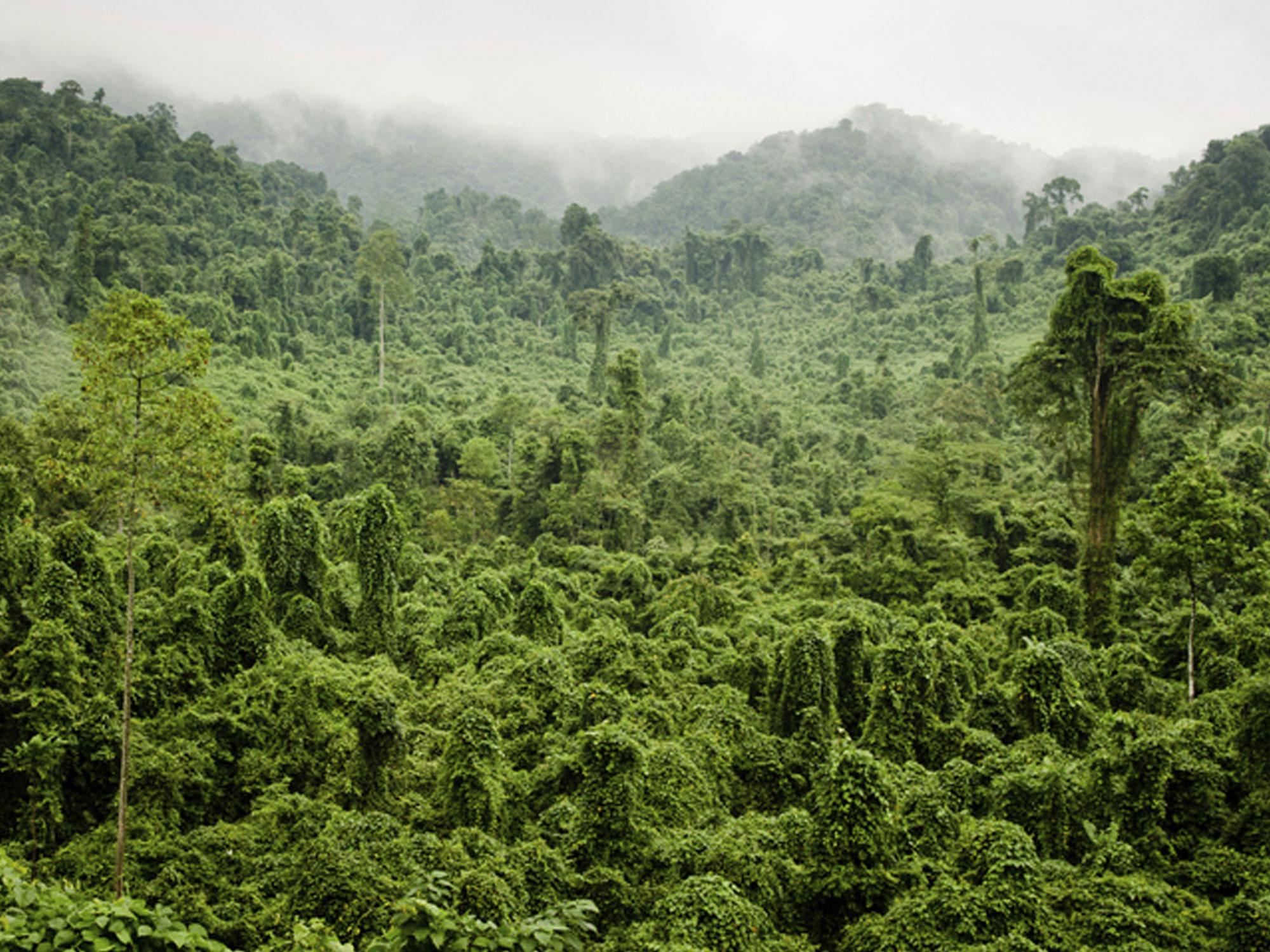 Rainforest protection - Renewable energy brokerage
