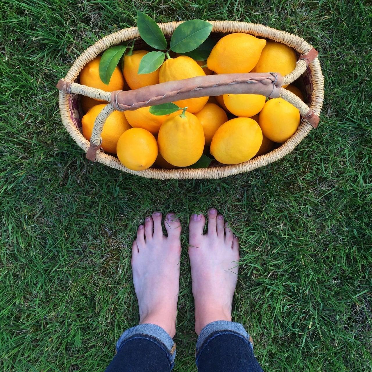 Lemon harvest