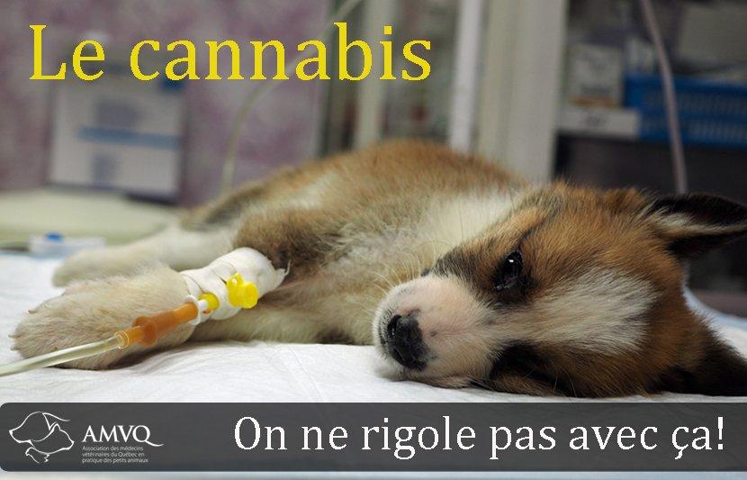 Le-cannabis-on-ne-rigole-pas (1).jpg